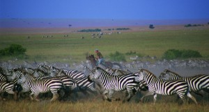 Galloping with Zebra