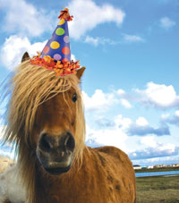 Happy Brithday horse