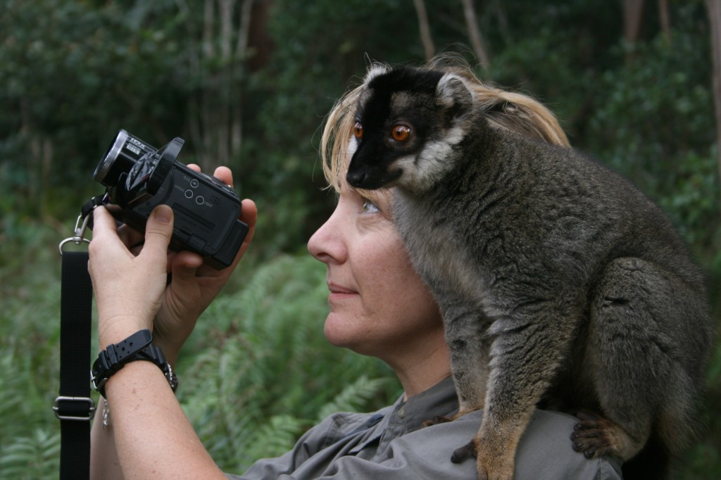 An inquisitive lemur