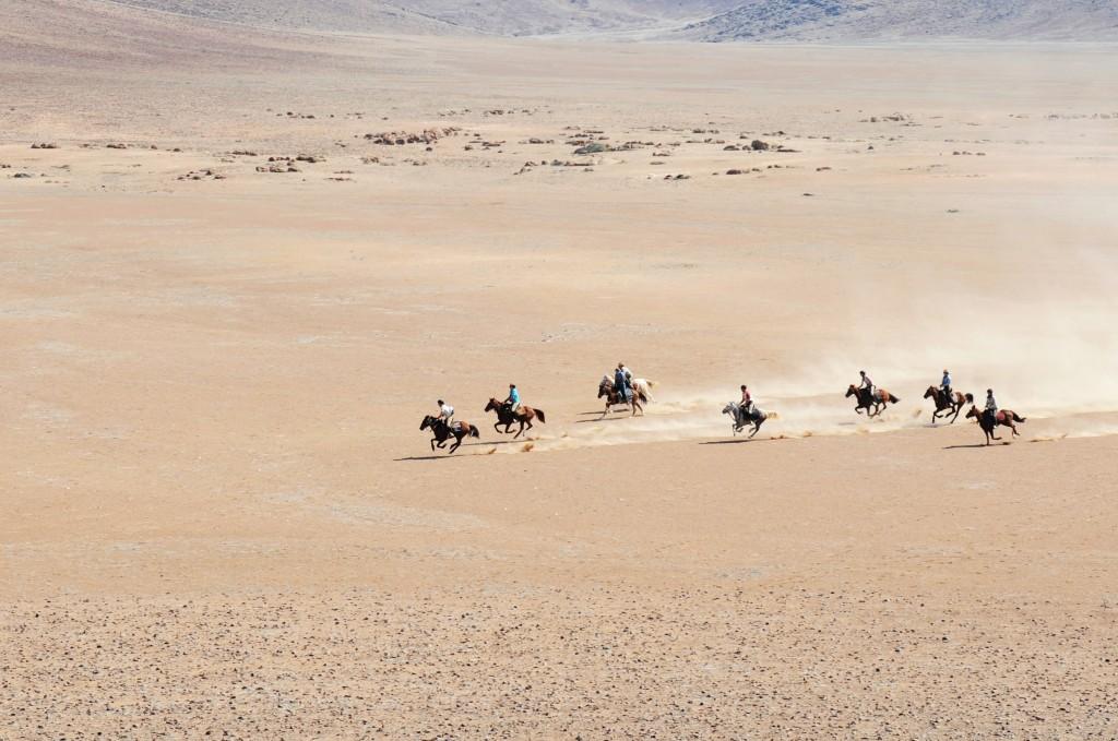 Galloping across the Namib Desert