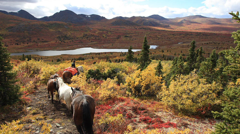 Trekking with pack horses
