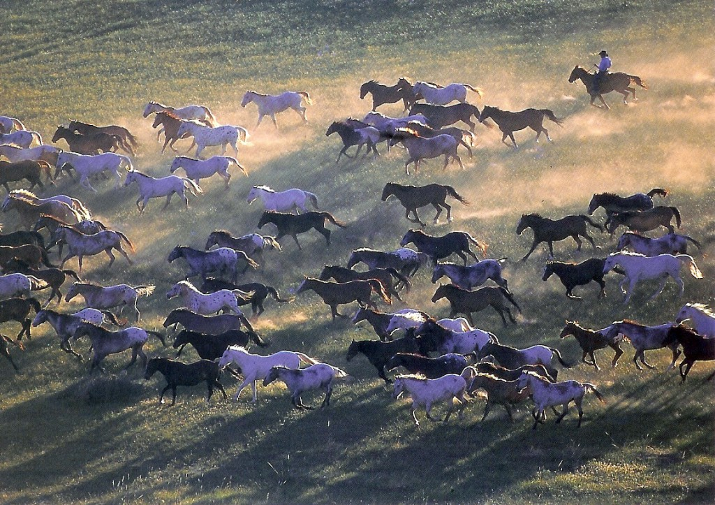 Running with the Herd