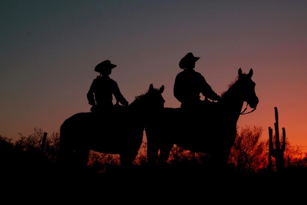 Tucson White Stallion 031