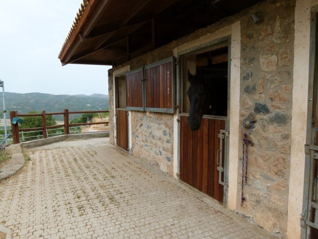 Wallino's stable view