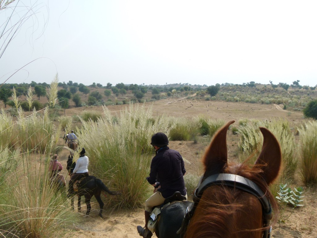 Between the horses ears in India