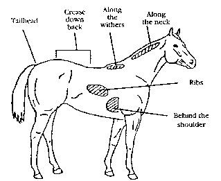 a vet u0026 39 s insight on the condition of horses within the