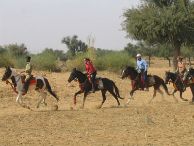 Canter in the desert on Marwari horses