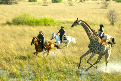galloping with giraffe
