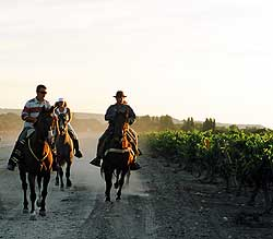 Cantering beside the vinyards of Ribero del Duero