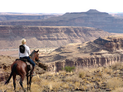 Horse overlooking canyon view