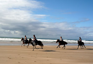 Galloping down the beach at Wavecrest