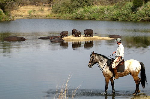 Viewing hippos from horseback