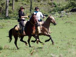 galloping gauchos