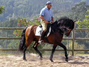 Beautiful Lusitano being schooled