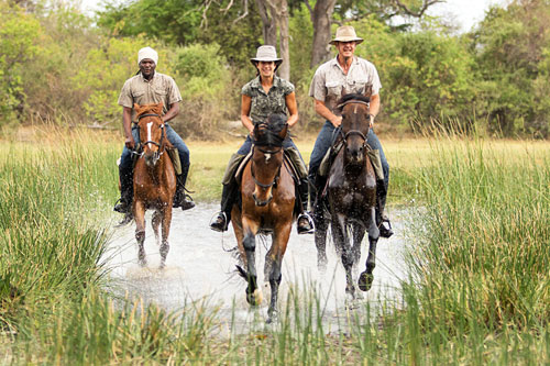 Cantering in the Okavango Delta