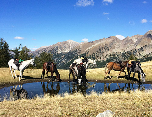 Horses at a mountain lake