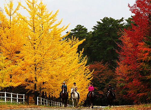 Autumn colours in Japan