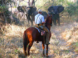 Elephant viewing on horseback