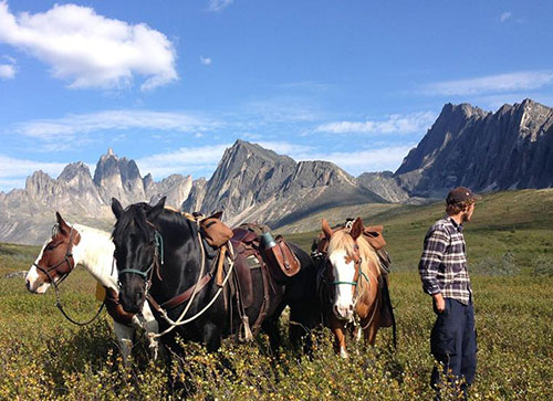 Horses in the Yukon