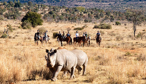 Spotting Rhino in the Entabeni Reserve