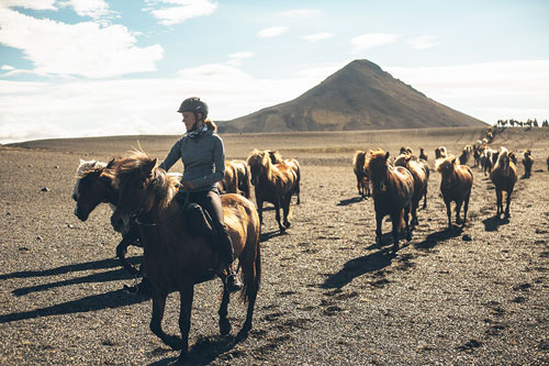 Riding with the herd in Iceland