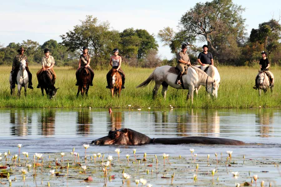 Group of riders watch some hippos