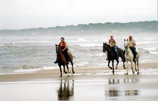 More beach gallops!