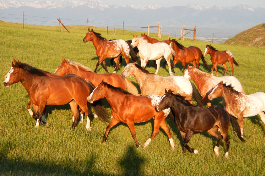 horse herds in USA holiday