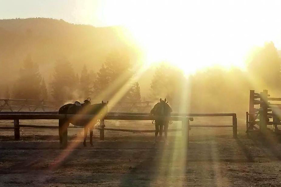 horses ready to go at sunrise on riding holiday in USA