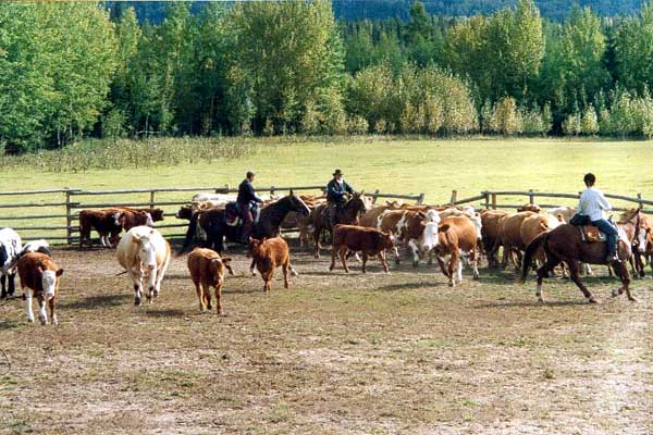 alberta working ranch  canada
