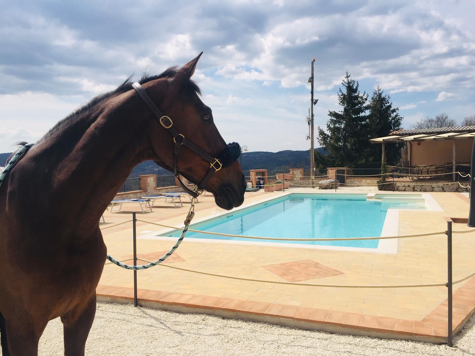 Show Jumping Combo Italy Horse Riding Holidays