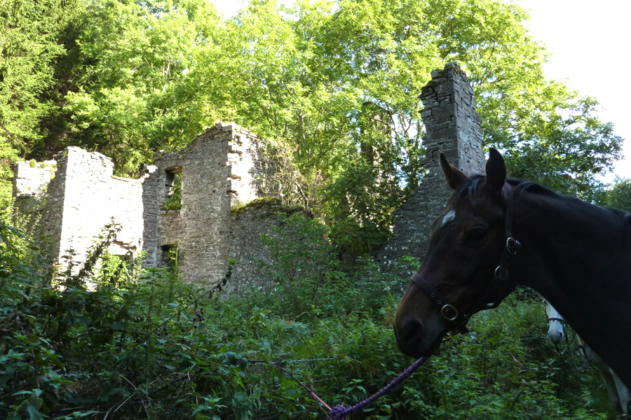 Horse with ruins