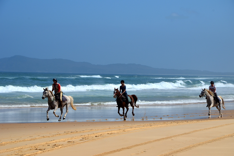 Three gallop along the beach