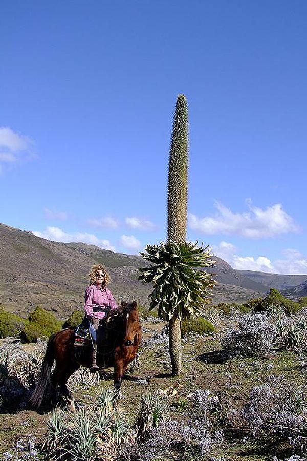 Abyssinian Explorer, Ethiopia | Horse Riding Holidays