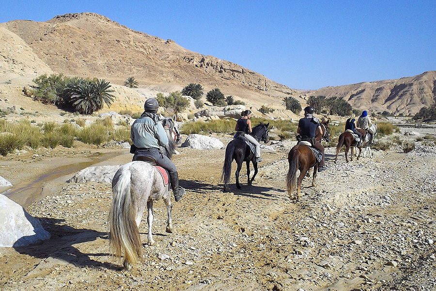 Horse riding in Tunisian desert