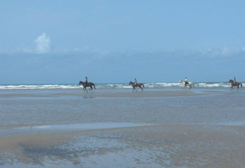 Galloping on the beaches