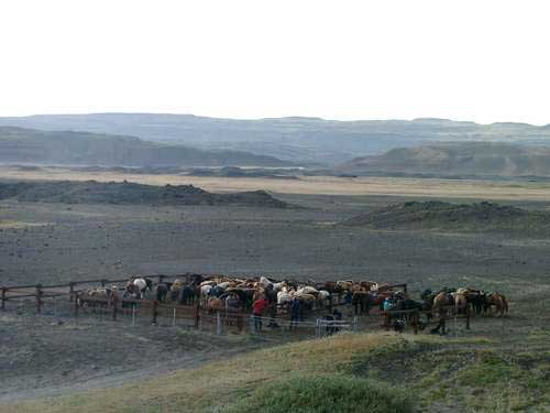 Horse corrals at dawn