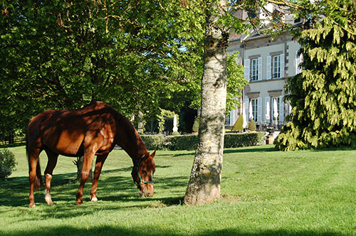 Grazing outside the chateau