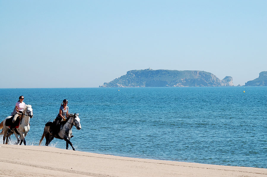 Cantering on the beach in the sunshine