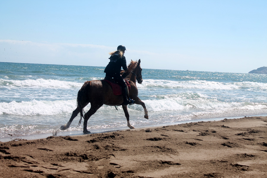 Fast riding horse riding holiday Spain