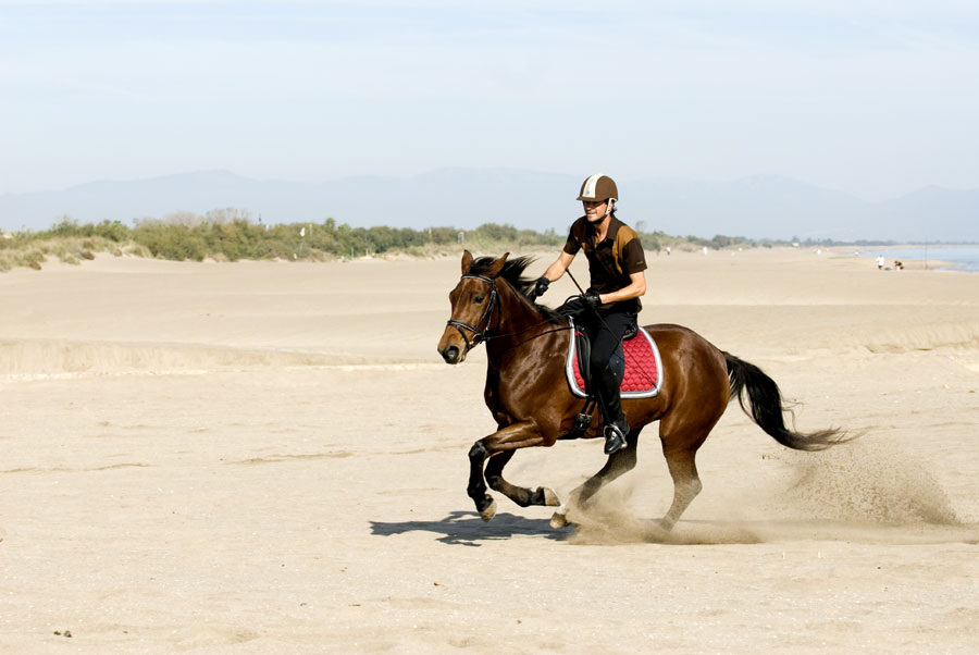 Canter on the beach - for the camera!