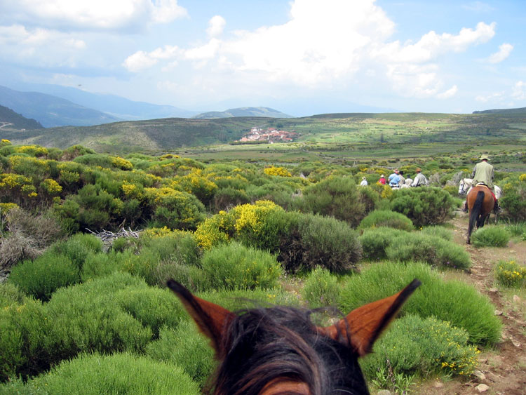 Horses eye view of our evening destination