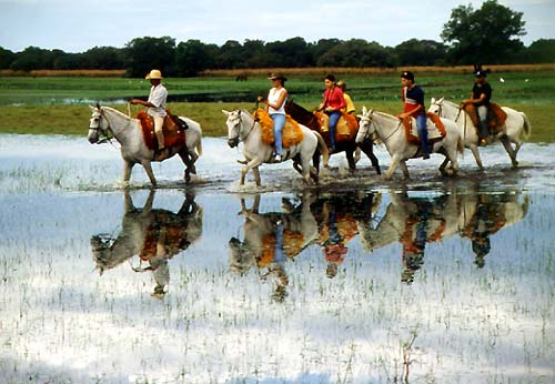Riders crossing a river in the Pantanal, Brazil