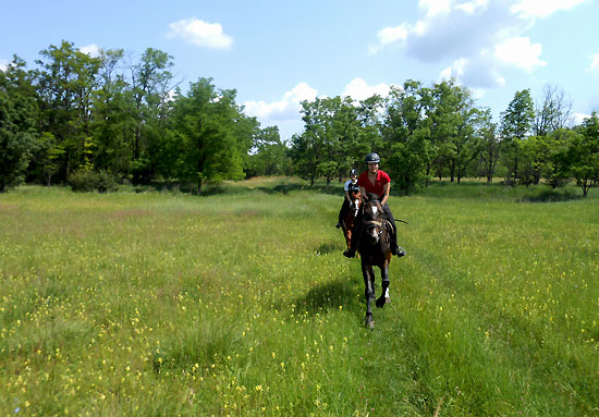 Riding in open grassland