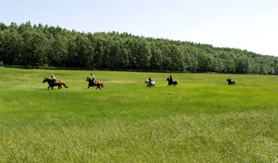 Fast paced riding on the Puszta