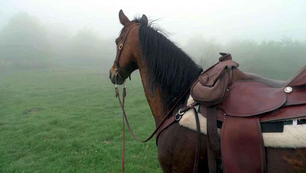 Looking for cattle on a misty morning