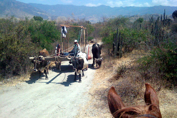 Rush hour traffic in Oaxaca