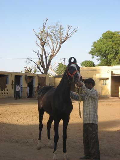 Indian riding stables
