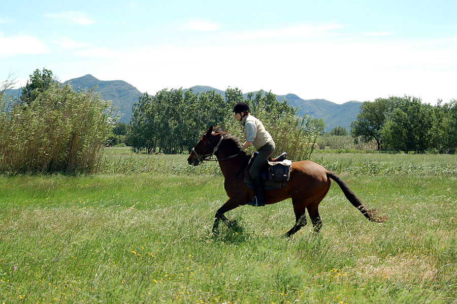 Canter in Catalonia in December