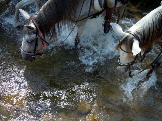 Horses enjoying the water